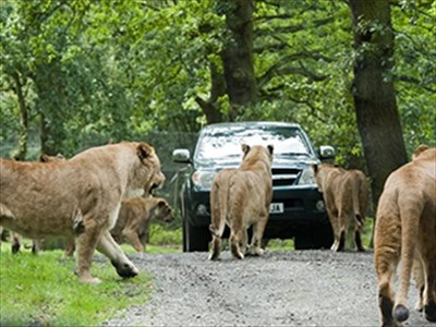 Thumbnail for Knowsley Safari