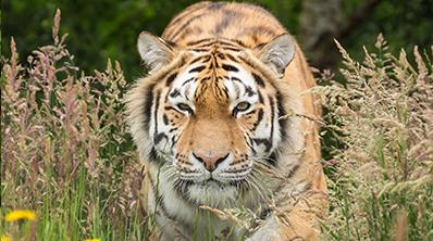 Visit the Knowsley Safari near to Liverpool to enjoy a 550 acre Safari Drive