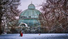 Winter Concert at the Palm House